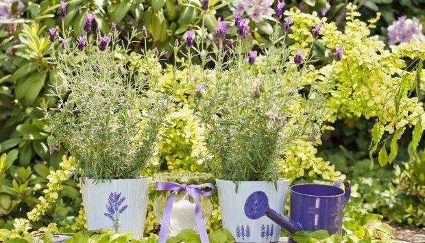 28 duben program zahrada kytky