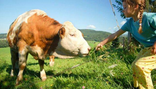 program děti kráva
