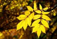 keltská znamení, stromy 11