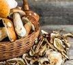 Vyzkoušejte! Zapečené palačinky s houbami a parmezánem