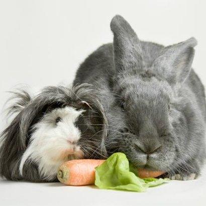 menu salát králík