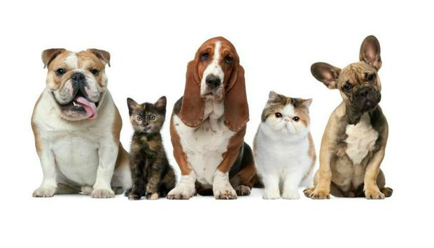 kočka pes