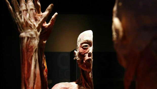 The Human Body Exhibition