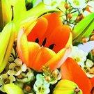 Vlasta 30 - 31 Rozkvetlý svátek 1