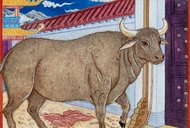 čínský horoskop, znamení 11