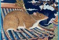 čínský horoskop, znamení 1