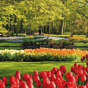 Květinové Holandsko 6