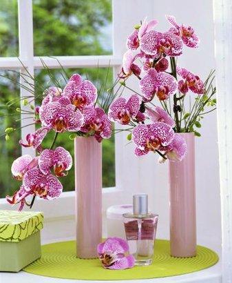 orchidej okno