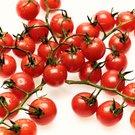 Cherry rajčata v šunce