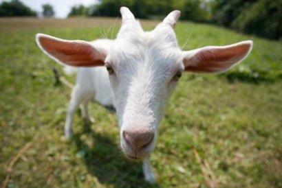 program koza