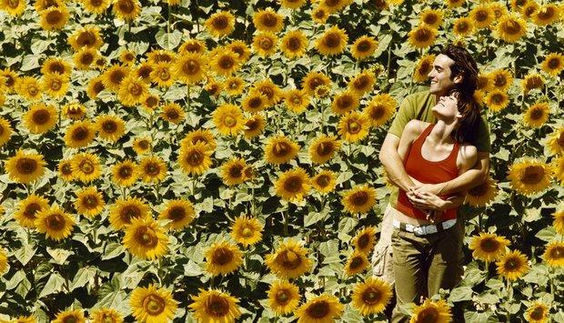 slunečnice pár
